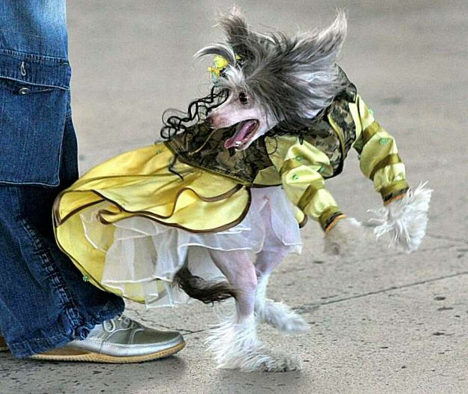 A woman walks her dog, dressed up in an outfit during an international dog show in Minsk on June 5, 2010. Photo: Viktor Drachev, AFP / Getty Images