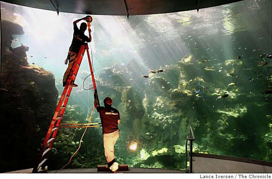 David Rivera polishes The Philippine Coral Reef aquarium with help from John Anderson as the California Academy of Sciences is in the final stages of preparation to it's grand opening late next month. Photo: Lance Iversen, The Chronicle