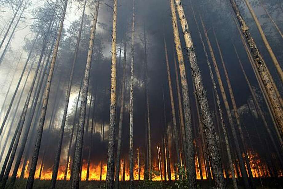 Flames travel along the floor of the forest as a parched forest burns near a suburb of the town of Voronezh some 500 km (294 miles) south of Moscow, Sunday, Aug. 1, 2010. Hundreds of new fires broke out Sunday in Russian forests and fields that have beendried to a crisp by drought and record heat. Photo: Mikhail Metzel, AP