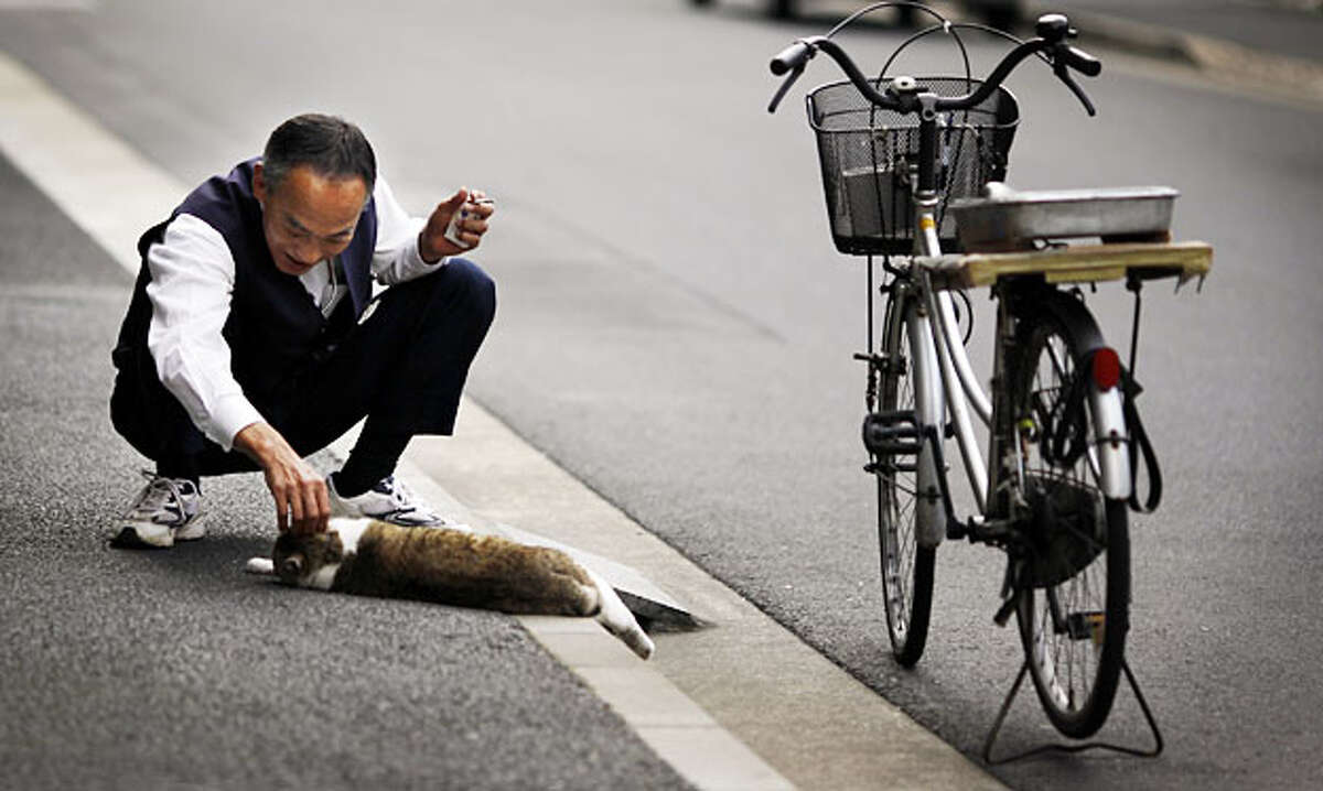 A man pets a cat in a street in Tokyo Friday, June 11, 2010.