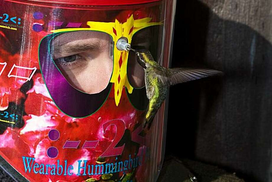 Hummingbird enthusiasts, how far are you willing to go for the ultimate hummingbird experience? Because a California inventor has created a hummingbird feeder that you wear on your face. For $79.95 (shipping included) you buy one of these plastic helmets to pop on your head, sit quietly and motionless near a tree, and wait for the buzzing little birds to zoom up and drink sweet sugar water from a hole between your eyes. It sounds sort of awesome, and sort of terrifying. (Courtesy Oliver Hulland/MCT) Photo: Oliver Hulland, MCT