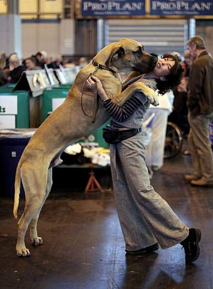 A dog jumps up on his owner on day one of the annual Crufts dog show at the National Exhibition Cent