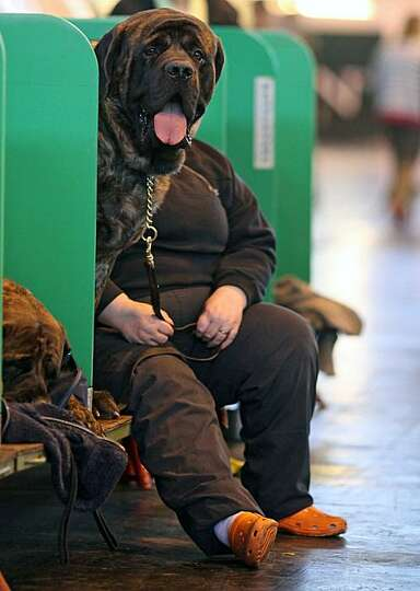 An owner sits alongside a dog taking part in Britain's annual Crufts dog show at the NEC Arena in Bi
