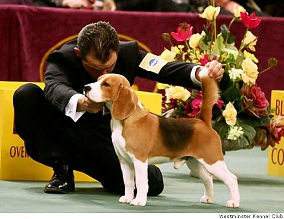 Westminster Dog Show   Tribute