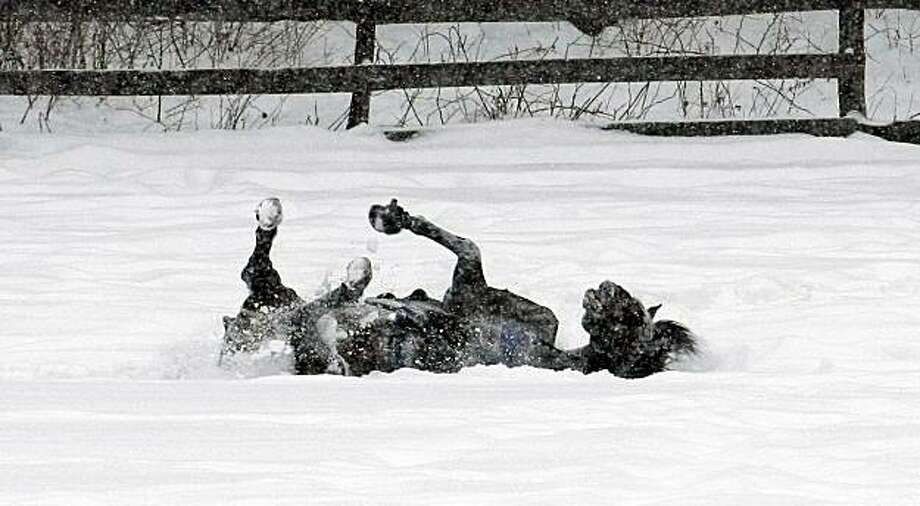 A horse rolls around in the snow Tuesday, Jan. 5, 2010, in Gates Mills, Ohio.  Forecasters say snow will continue to fall on parts of northeast Ohio that already have two feet or more on the ground. Photo: Tony Dejak, AP