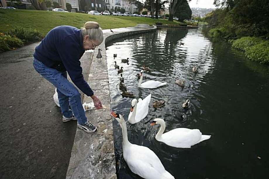 cityexposed_swan00198_mk.JPG  theCity Exposed Swan Lake A recent Tuesday 8:28 a.m.  Every morning as cars pile off the Golden Gate Bridge on their way to work, Judy Whilt, 69, finds her own peace by feeding the swans that live in the lagoon at the Palace of Fine Arts. Fresh dew kisses the grass and an orange glow drapes the palace dome behind her. Four mute swans, Monday, Wednesday, Friday and Blanch come darting towards her when she whistles for them while toting a bag stinking of Cheez-Its, grapes, lettuce and a can of corn. JudyÕs 13-year-old labor of love is financed from the lining of her own pocket. Swan duty at the lagoon is a shared responsibility between she and another friend, Gayle Haggerty, who mostly takes the night shift and tourists often help out unknowingly as well. ÒThey like any kind of salty cracker,Ó she says as the usual lagoon walkers stop to say hi to her with their little dogs. Judy has treats for them too.  9/18/07.  Mike Kepka/The Chronicle  (cq) Ran on: 09-30-2007 Photo: Mike Kepka, The Chronicle