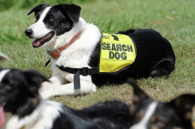 Cara is one of several border collies utilized in Wednesday's search for 14-year-old Sharon West at the Sea Breeze Youth Soccer Club. Guiseppe Barranco/The Enterprise Photo: GUISEPPE          BARRANCO / B