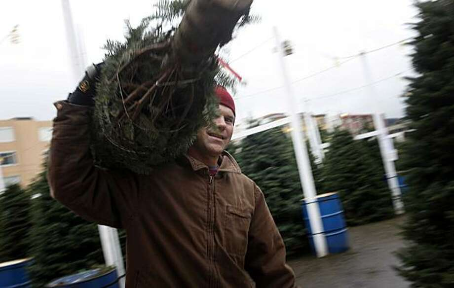 Olaf Elze, 45, owner of the Educated Tree, a Christmas Tree lot nestled near the playground at Marina Middle School, readies a new tree for sale on Tuesday Dec. 14, 2010 in San Francisco, Calif. Photo: Mike Kepka, The Chronicle
