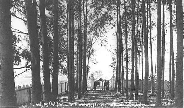 """The view at the southwest corner of the La Loma ranch. Thomas loved planting trees and orchards and raising all kinds of animals on his ranch. In his old age he offered the property to the city as a park if they would simply buy the western adjoining property as an entrance. The city did not take Thomas up on his offer. From the book """"Eccentrics, Heroes, and Cutthroats"""" by Richard Schwartz. Photo: Courtesy Richard Schwartz"""