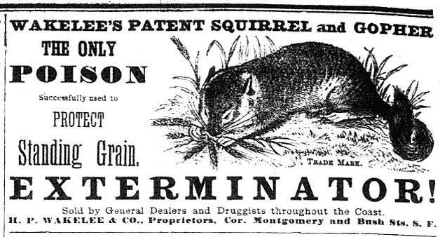 """Berkeley Advocate, December 1879. In the early years of Contra Costa County, squirrels were living all of the ranchers' fields. As the years went on the squirrels learned the ranchers' seed crops provided the best meals. The ranchers felt them to be a threat to their livelihood and had no sympathy for them being there first. They had lawmakers pass laws requiring all ranchers to put out squirrel poison. The poison also killed all the predators of the squirrels including the ravens and crows, which were noted to disappear in the 1870s and did not return to the area until the last decade. From the book """"Eccentrics, Heroes, and Cutthroats"""" by Richard Schwartz. Photo: Courtesy Richard Schwartz"""