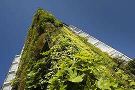 Patrick Blanc's vertical garden installation on The Athenaeum
