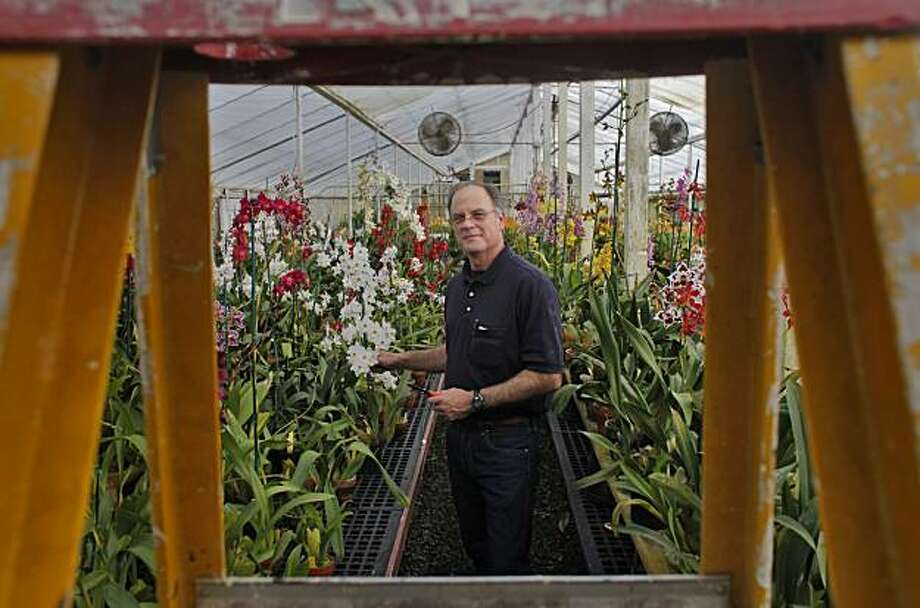 Thomas Perlite shows off various varieties of orchids at his nursery, Monday Feb. 21, 2011, in San Francisco, Calif. Photo: Lacy Atkins, The Chronicle