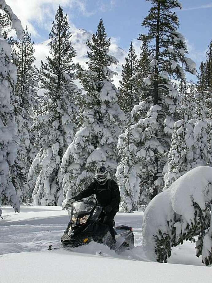 Bernd Schwarzer rounds the bend on a snowmobile in deep powder on the north flank of Mount Shasta last Sunday in deep forest 14 miles from the trailhead and staging area at the Deer Mountain Snowmobile Park. Photo: Tom Stienstra