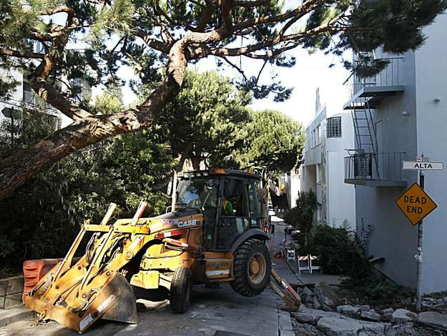 A construction crew reconfigures the road around a low-hanging branch (above left) at Montgomery and Alta streets in San Francisco, Calif., on Tuesday, Jan. 25, 2011. The tree is a popular roost for the world-famous Wild Parrots of Telegraph Hill prompting officials to detour around it, rather than hacking the branch off. Photo: Paul Chinn, The Chronicle