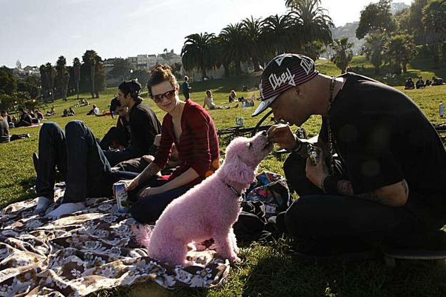 """2. San Francisco:score of 74.3. NerdWallet wrote: """"San Francisco is a city for dog lovers. With 27 total dog parks, there are plenty of options. Many parks even have breed-specific events, such as Pug Sunday at Alta Plaza Park in Pacific Heights."""" Photo: Liz Hafalia, The Chronicle"""