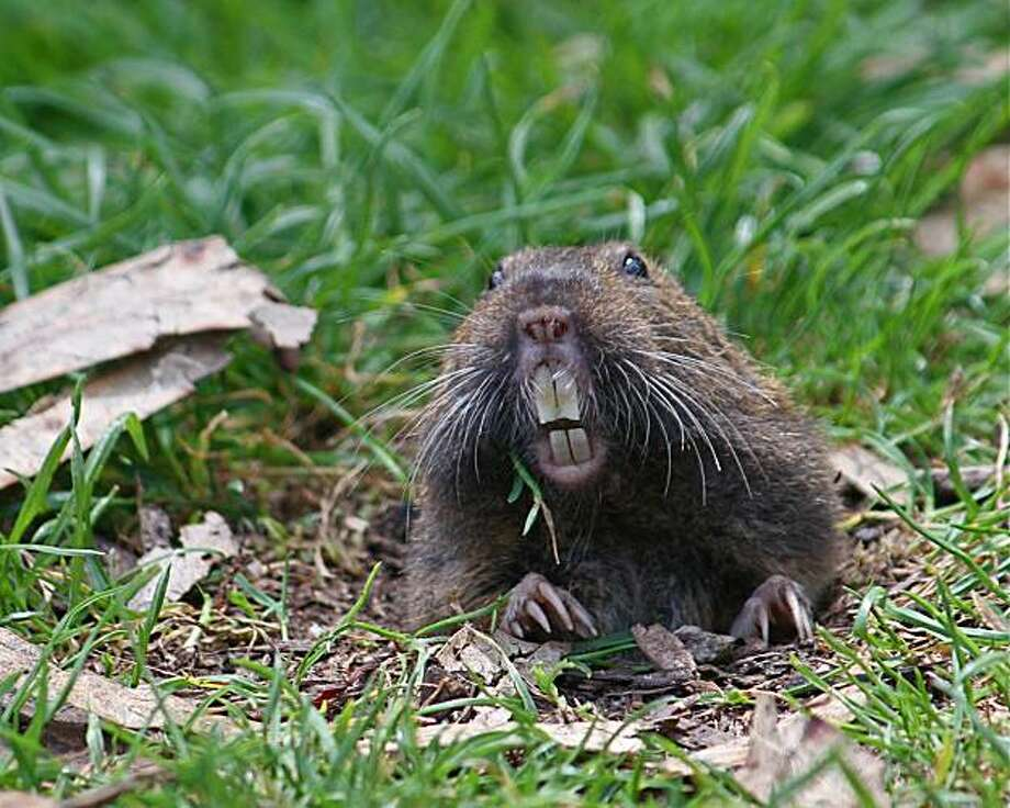 Gopher Photo: WildCare