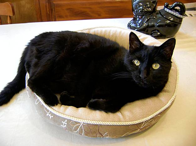 Caring For A Cat Whose Kidneys Have Failed