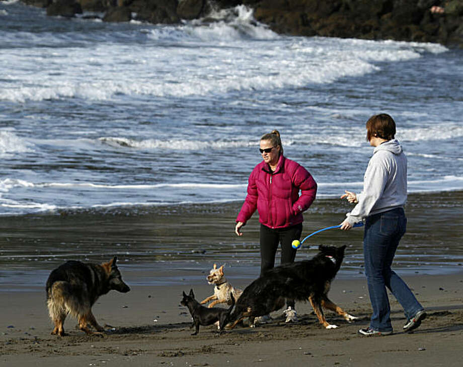Roommates Erin West (left) and Shawna Whooley let their dogs Mattie, Zippy, Tater Tot and G.G. run free at Muir Beach on Wednesday, Dec. 15, 2010. Officials at the Golden Gate National Recreation Area are considering plans to tighten restrictions on off-leash dog areas at several locations, including Muir Beach. Photo: Paul Chinn, The Chronicle