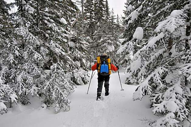 Skiing back country bush at the Chic Choc Mountain Lodge. Photo: Margo Pfeiff, Special To The Chronicle