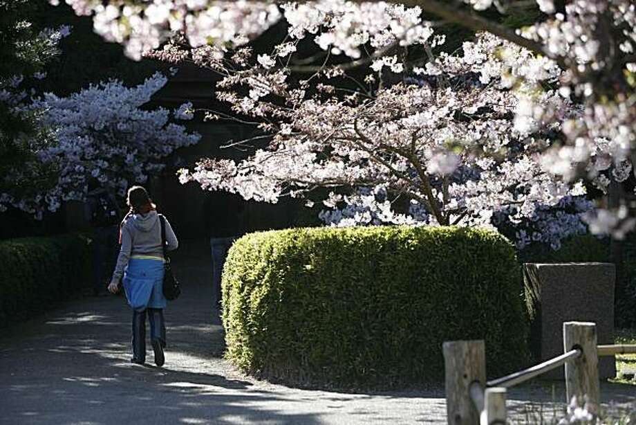 Nina Schriber, of Portland, Ore., visits the blooming cherry blossoms at the Golden Gate Park Japanese Tea Garden, on Thursday, March 27, 2008 in San Francisco , Calif. Photo: Mike Kepka, The Chronicle