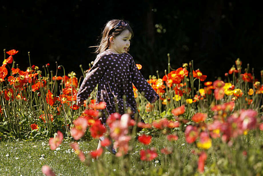 As the sun shines brightly overhead, Grace Sohn, 3, runs through a row of poppies in front of the Conservatory of Flowers in Golden Gate Park on Monday Feb. 22, 2009 in San Francisco, Calif. Photo: Mike Kepka, The Chronicle