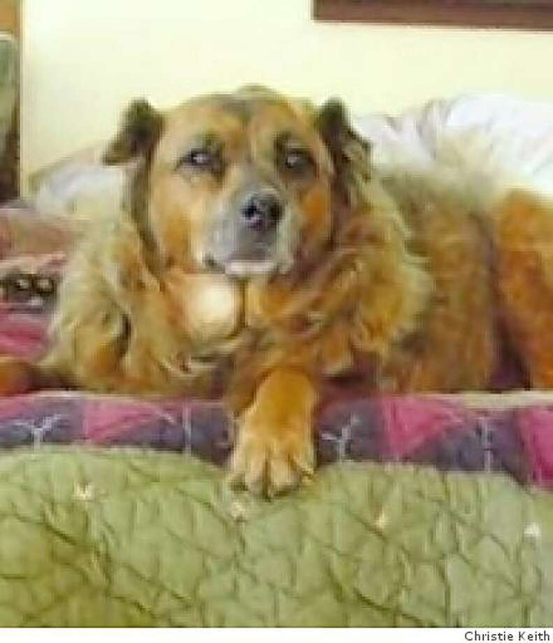Colleen, a chow mix adopted by Christie Keith from the Peninsula Humane Society. Here, she is around 13 years old. Photo: Christie Keith
