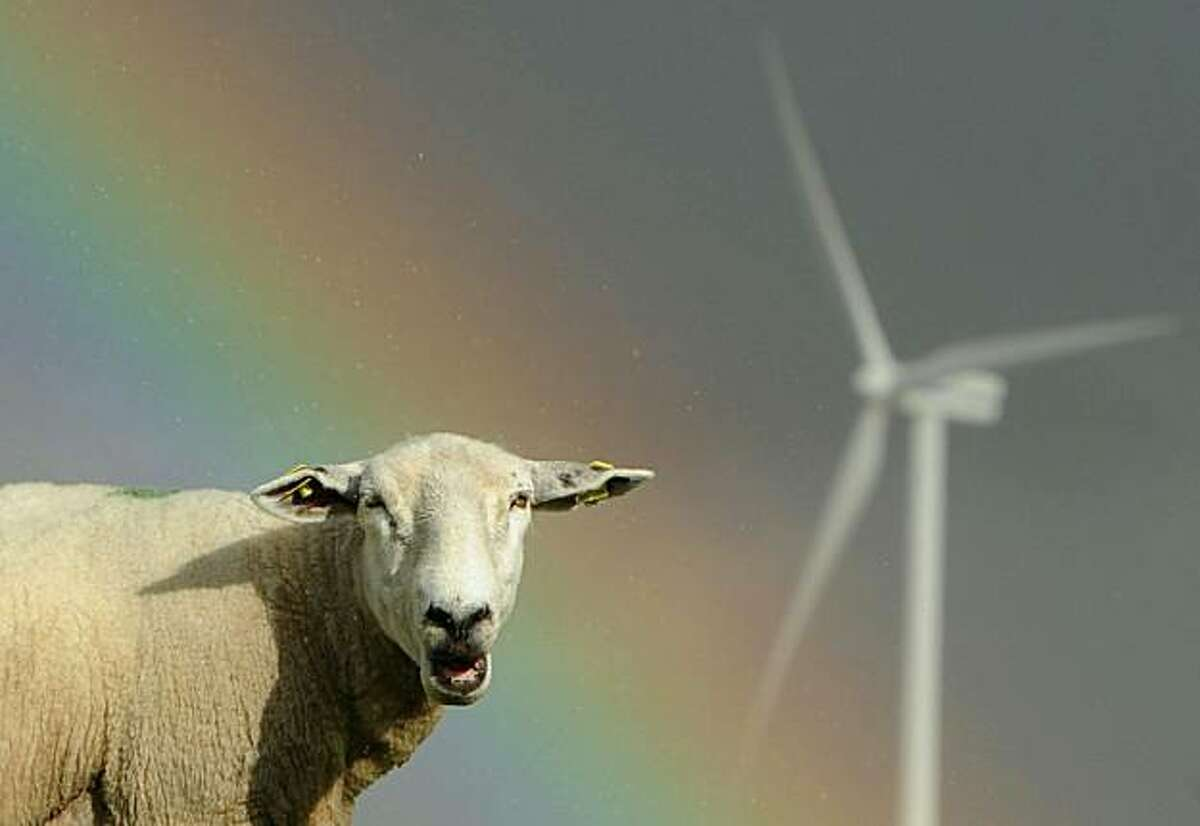 Sheep graze close to electricity generating wind turbines as a rainbow is seen in the background on July, 26 2010 near the northern German town of Husum.