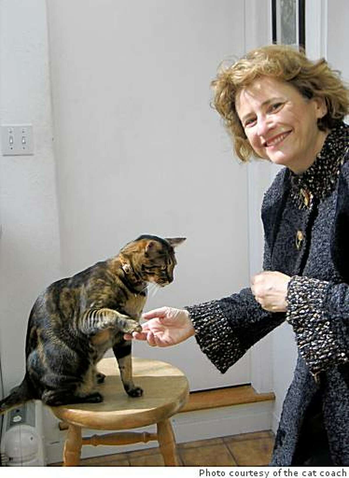 """Marilyn Krieger, a Redwood City-based certified cat behavior consultant, has trained her own cats as well as the cats of her clients using a clicker and positive reinforcement. """"Besides clicker training for behaviors like scratching or inappropriate elimination or aggression, you can teach them tricks,"""" she says. """"My cats shake hands, and high five. They jump through hoops. They also retrieve my keys for me."""""""