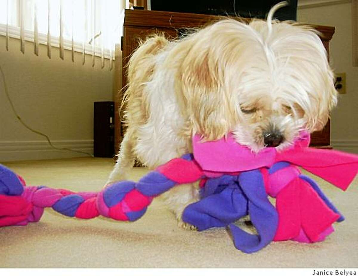 At first, Suzie didn't know what to do with toys. She figured it out in her foster home while recovering from surgery.