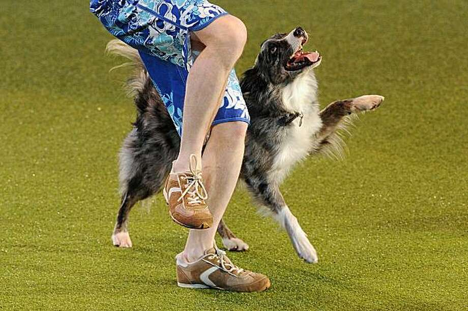 "A man and his dog perform Heelwork to Music at the Crufts Dog Show in Birmingham, central England, on March 11, 2010. The annual event sees dog breeders from around the world compete in a number of competitions with one dog going on to win the ""Best in Show"" category. Photo: Ben Stansall, AFP / Getty Images"