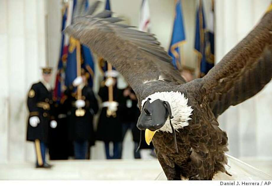 "In this photo provided by the Department of Defense, an, American Bald Eagle, spreads its wings on stage during the "" We Are One: Opening Inaugural Celebration at the Lincoln Memorial"" in Washington, Sunday, Jan. 18, 2009.  AP Photo/Department of Defense, Daniel J. Herrera) Photo: Daniel J. Herrera, AP"