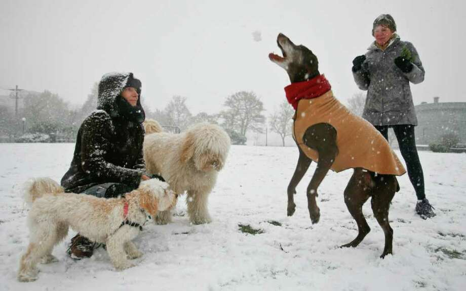 Stephanie Jeter, left, watches as her dog Lola, a German Shorthaired Pointer, catches a snowball in Cal Anderson Park on Sunday, Jan. 15, 2012. The neighborhood saw its first few inches of snow Sunday afternoon, with more showers expected on Monday. Photo: LINDSEY WASSON / SEATTLEPI.COM