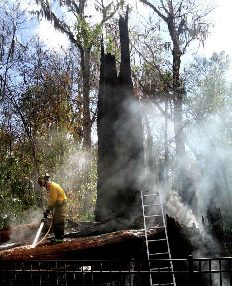 A Seminole County firefighter foams down what is left of a 3,500-year-old cypress tree that burned in Big Tree Park. Photo: Orlando Sentinel, AP, Joe Burbank