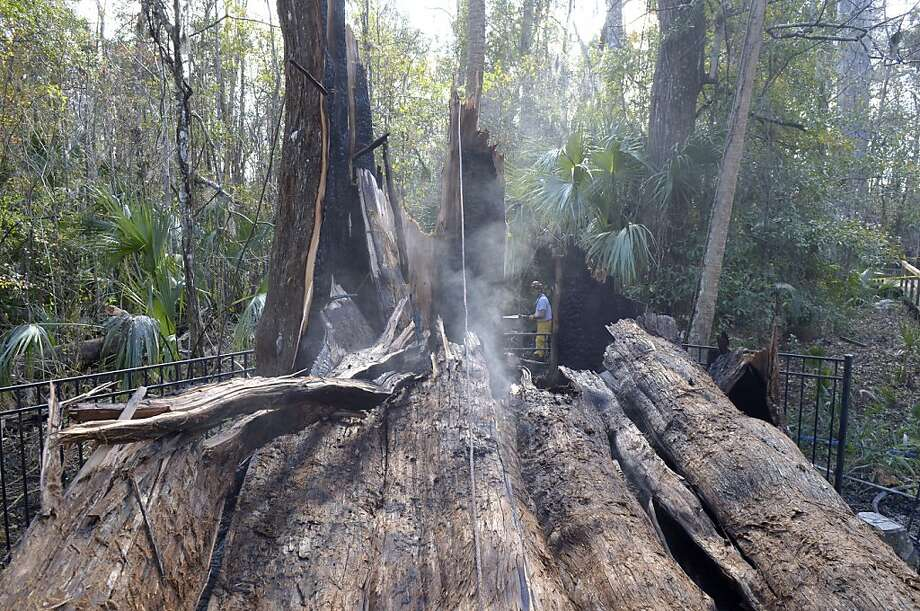 "Seminole County firefighter Al Caballero, center, sprays water on the smoldering base of one of the remains of a 3,500-year-old cypress at Big Tree Park in Longwood, Fla., Monday, Jan. 16, 2012. The 118-foot-tall bald cypress tree named ""The Senator"" collapsed after it caught fire early Monday. (AP Photo/Phelan M. Ebenhack) Photo: Phelan M. Ebenhack, Associated Press"