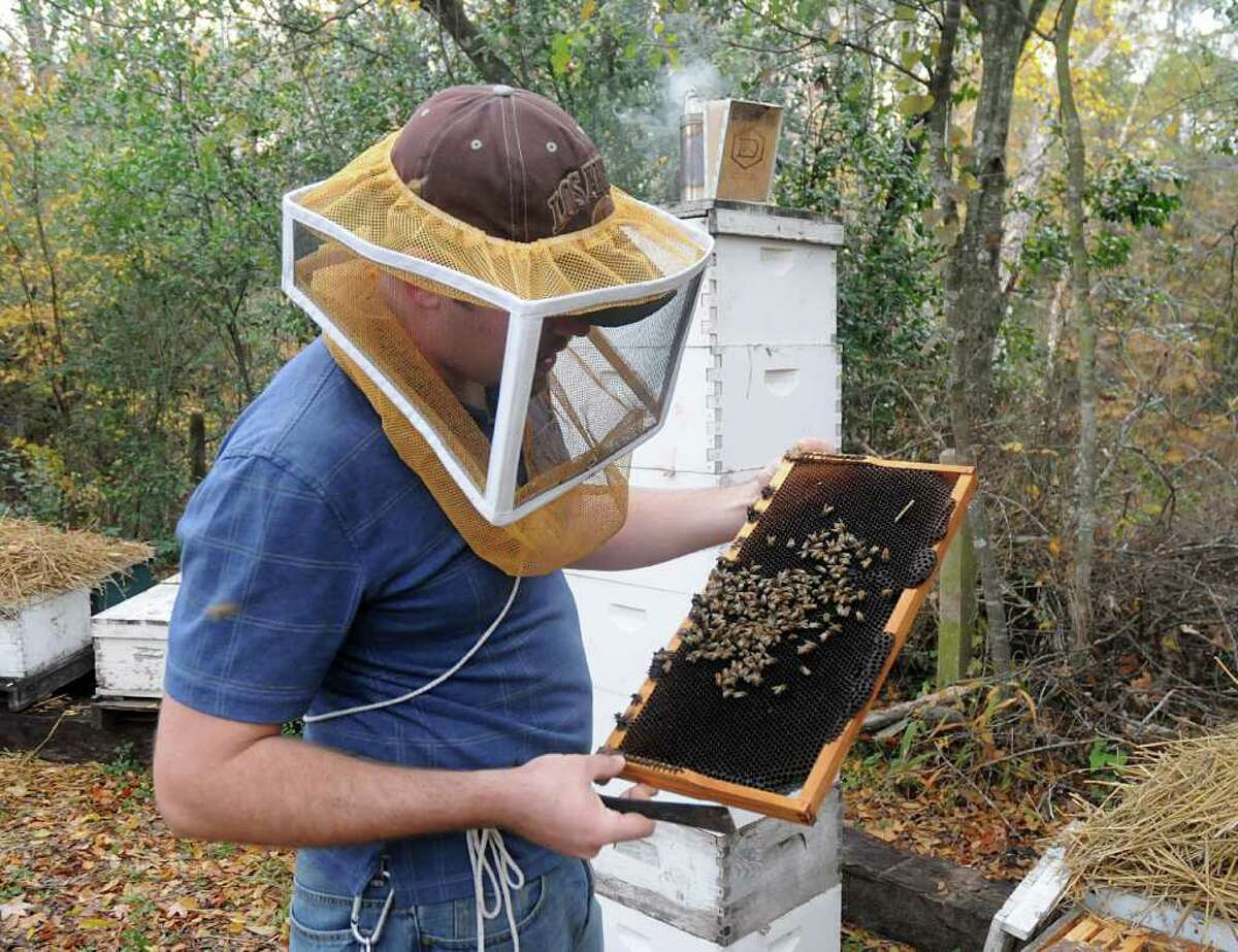 Beekeeper Conrad Craft, of Conroe, examines a distressed rack of bees at a hive at his parents home. Craft was hired last year to manage hives at Lee's Bees of Texas in Hockley. Both small scale and commercial beekeepers are worried about the health of their hives and honey crops because of the extended drought. Craft has been working on nursing the bees and their hives back to a healthy state.
