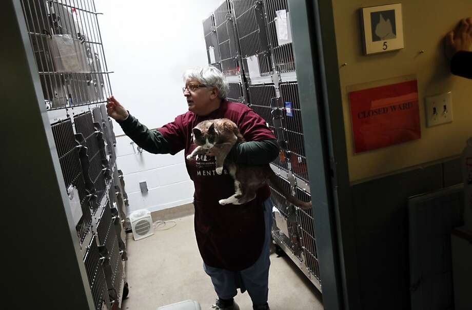 Animal shelter volunteer Mary Cochran plays with one of the 93 cats taken from the home of Jan Van Dusen. Photo: Sarah Rice, Special To The Chronicle