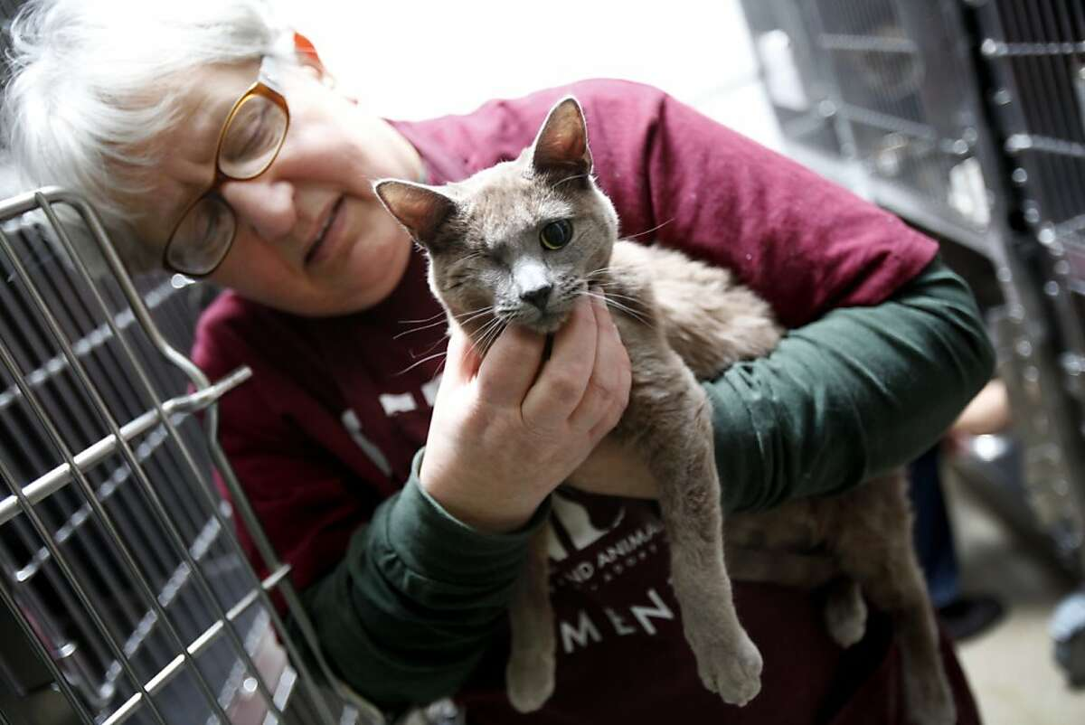 Mary Cochran, a volunteer, holds one of the 93 cats rescued from West Oakland lawyer Janet Van Dusen at Oakland Animal Services in Oakland, Calif., Monday, January 16, 2012. This cat came in missing an eye.