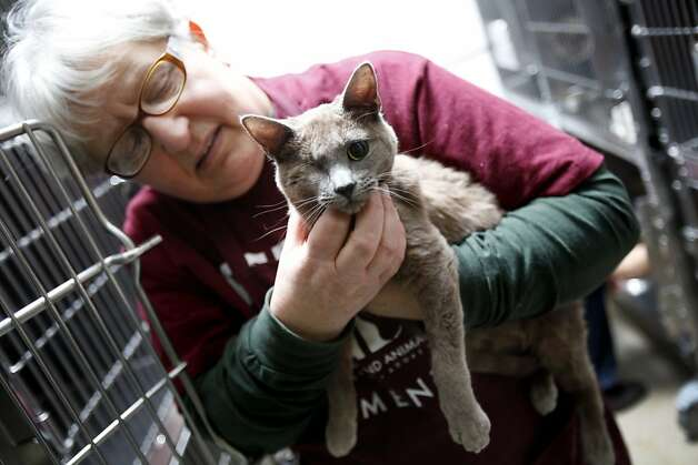 Mary Cochran, a volunteer, holds one of the 93 cats rescued from West Oakland lawyer Janet Van Dusen at Oakland Animal Services in Oakland, Calif., Monday, January 16, 2012.  This cat came in missing an eye. Photo: Sarah Rice, Special To The Chronicle