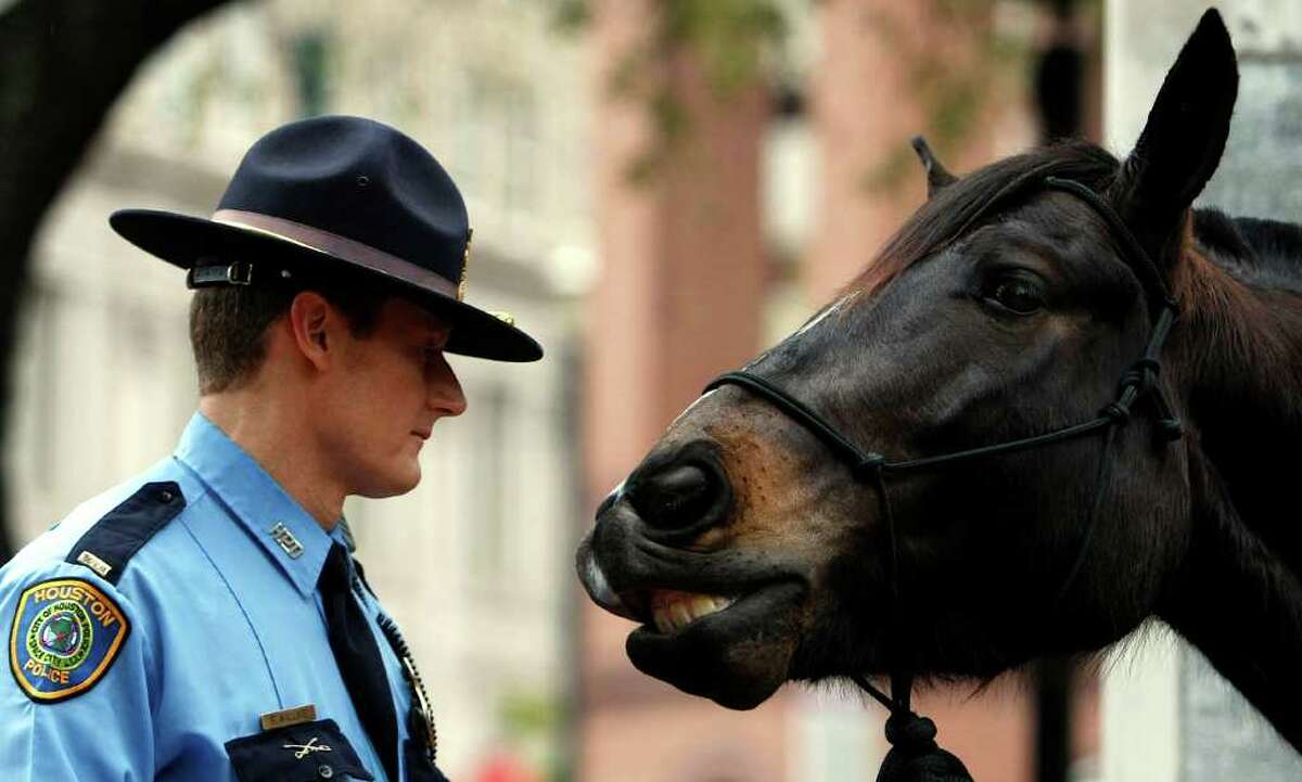 It's not exactly a gift horse, but HPD Lt. Randall Wallace looks his four-legged partner in the mouth Tuesday before a news conference announcing the Adopt-a-Horse Program in Market Square downtown.