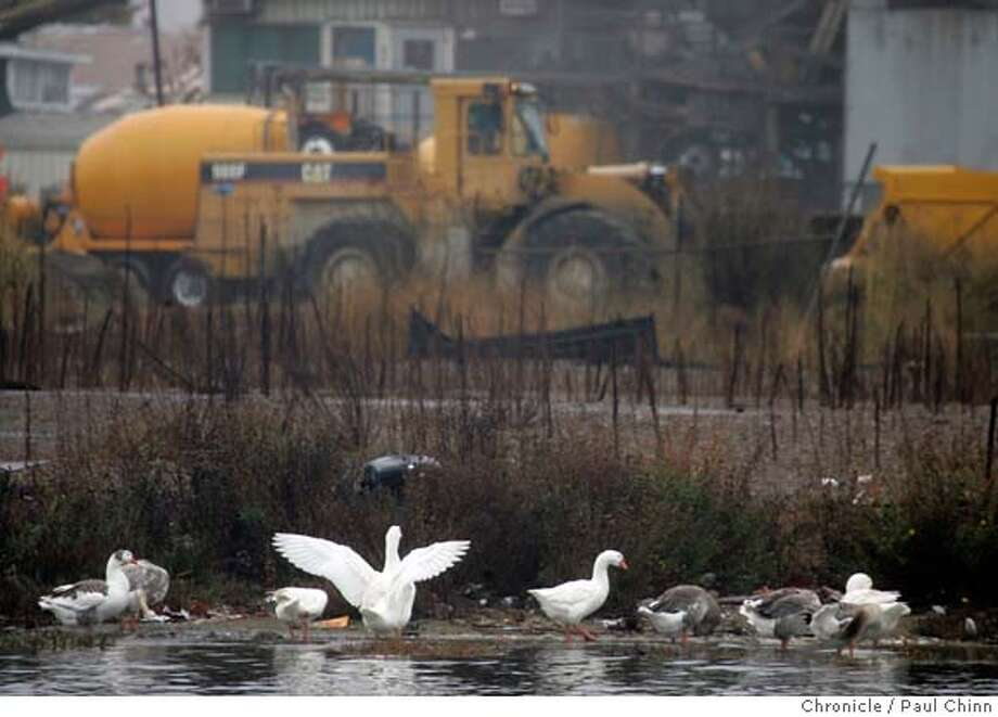 oakhousing_039_pc.jpg  Ducks gather on the shoreline in front of the Hanson Aggregate gravel yard on the north end of the proposed redevelopment project near Jack London Square in Oakland, Calif. on 11/29/05. Oakland�s largest housing development in more than 30 years would re-shape a desolate section of the waterfront into a vibrant new neighborhood with 3,200 new dwellings and a park. Mayor Jerry Brown and other supporters say it will help make the city more vibrant by luring thousands of professionals to live along the now-industrial tract near downtown.  PAUL CHINN/The Chronicle MANDATORY CREDIT FOR PHOTOG AND S.F. CHRONICLE/ - MAGS OUT Photo: PAUL CHINN