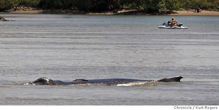 A person sits on his jet ski as the mother whale surfaces.  The two humpback whales that are swimming between Rio Vista and the Ryde Island ferry in the Sacramento river.  WEDNESDAY, MAY 23, 2007 KURT ROGERS RIO VISTA SFC  THE CHRONICLE Photo: KURT ROGERS