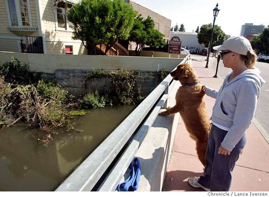BEAVERS_32480.JPG  Martinez resident Penny Mackey and her dog Roman stop to view the Beavers almost daily. A family of Beavers building their version of the American Dream, homes on the banks of a creek in downtown Martinez have created a political showdown between city government who says for the moment they can stay, but if they become a threat they could be killed. On the other side most residents and wildlife experts see them as fuzzy little cute neighbors who they enjoy watching. (MAY 16) (cq, SUBJECT ) Lance Iversen / The Chronicle Photo taken on 5/16/07, in MARINEZ, CA. MANDATORY CREDIT PHOTOG AND SAN FRANCISCO CHRONICLE/NO SALES MAGS OUT Photo: By Lance Iversen