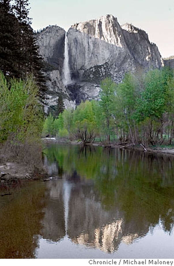 Merced River and Yosemite Falls.  Spring in Yosemite Valley. Dogwood in bloom, waterfalls in their full splendor and a battle between two environmental groups. The Wilderness Society and Friends of Yosemite don't see eye to eye over the recent 9th District Court's decision to halt the restoration and flood recovery plans in Yosemite.Maloney / CHRONICLE Photo: Michael Maloney