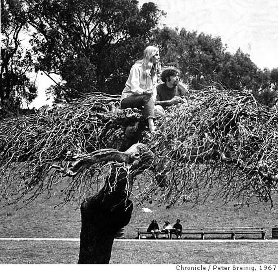 HIppies in a Tree. Golden Gate Park. 1967.  photo by Peter Breinig Photo: Photo By Peter Breinig