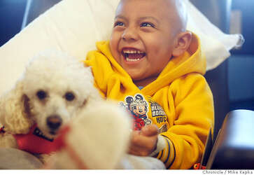 UCSF's 15-pound therapist / Izzy the poodle brings joy to