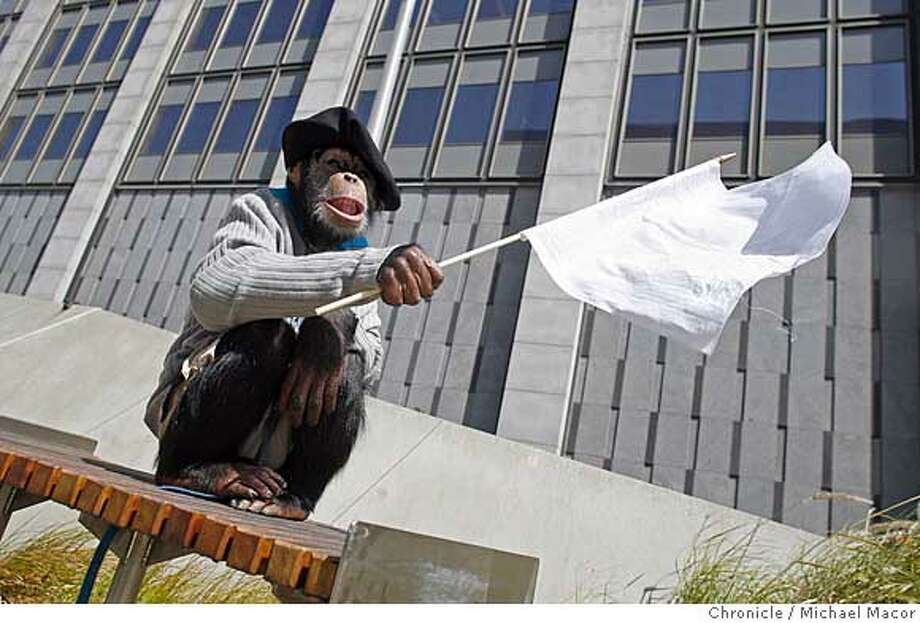 """""""April"""" the monkey, waves a white flag in front of the SF Federal Building, offices of House Speaker Nancy Pelosi are inside. Live monkeys lead protests against Harry Reid and Nancy Pelosi. Living, breathing, """"Surrender Monkeys,"""" will lead crowds of patriotic Americans protesting the efforts by Senate Majority Leader, Harry Reid, and House Speaker Nancy Pelosi, to undercut support for the missions of our troops in Iraq. Photographed in, San Francisco, Ca, on 5/17/07. Photo by: Michael Macor/ The Chronicle Photo: Michael Macor"""