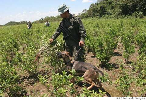 Impoverished farmers' coca habit is tough to break, U S -backed