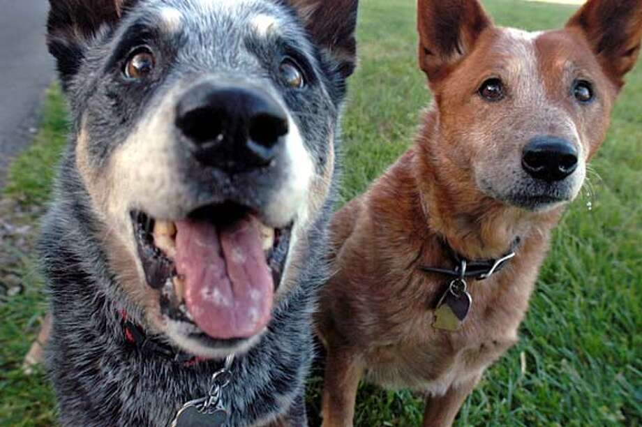 Teaching two dogs in one home to just get along together - SFGate