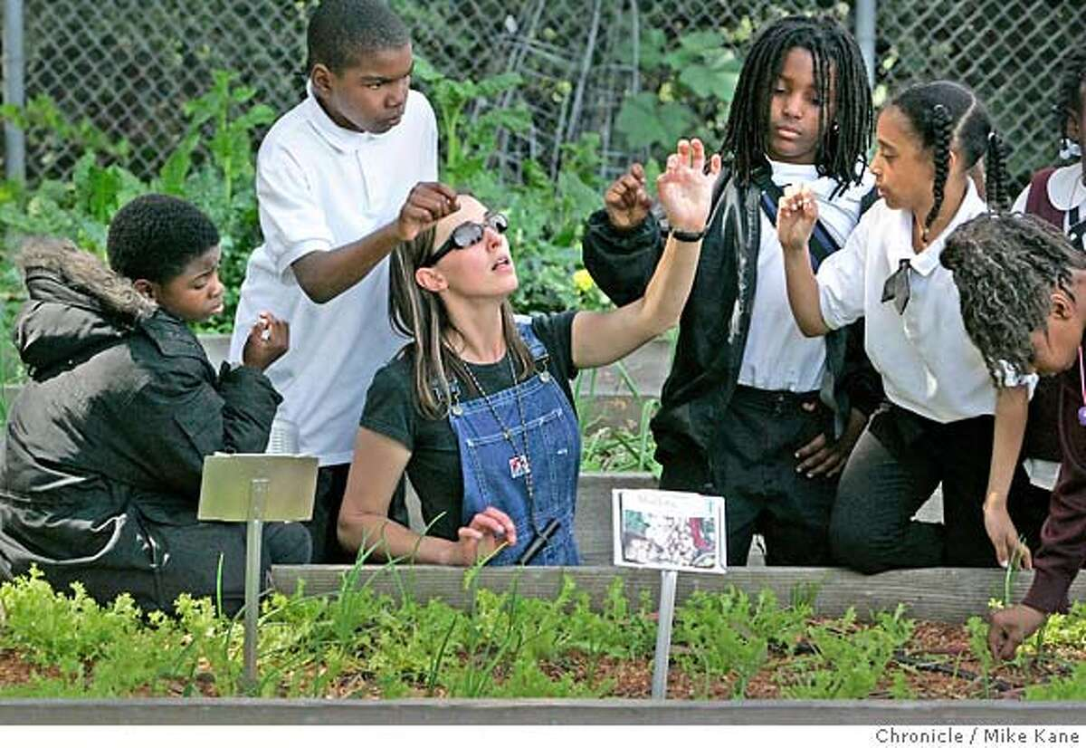 GREENSKULS_016_MBK.JPG Garden coordinator Sybil Tate demonstrates to fourth-graders how to pinch leaves from greens growing in a garden plot to be used in a salad that they would later eat at Willie Brown Jr. Elementary in San Francisco, CA, on Thursday, March, 29, 2007. photo taken: 3/29/07 Mike Kane / The Chronicle ** Sybil Tate