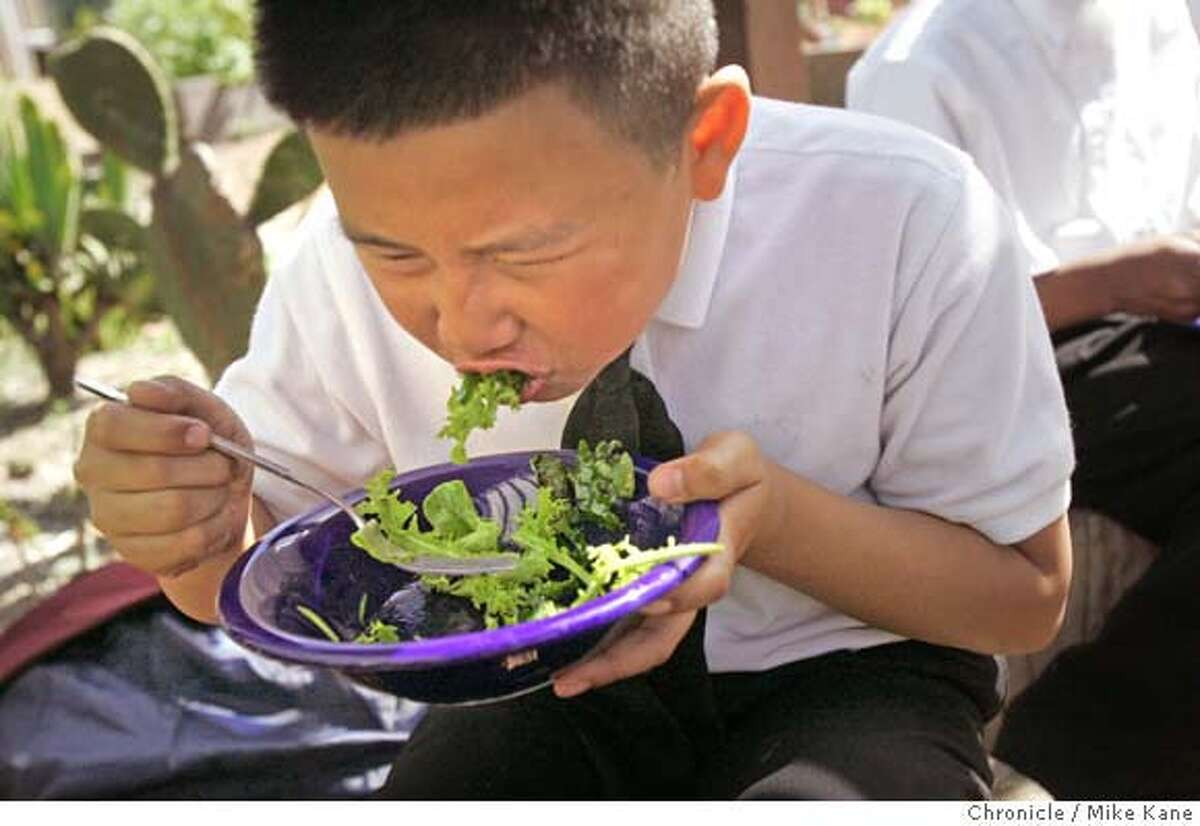 GREENSKULS_132_MBK.JPG Fourth-grader Dallas Phan, 10, takes a bite of lettuce that his class helped grow and harvest while eating a salad at Willie Brown Jr. Elementary in San Francisco, CA, on Thursday, March, 29, 2007. photo taken: 3/29/07 Mike Kane / The Chronicle **Dallas Phan
